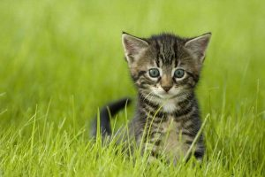 Fear Free and Cat Friendly in Lincolnwood