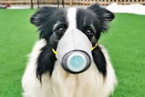Coronavirus and Your Dog